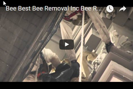commercial-bee-removal-services