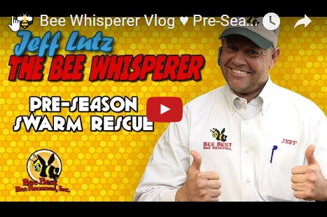 jeff-lutz-bee-whispers-help-tips