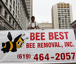 bee-removal-san-diego-downtown-jeff