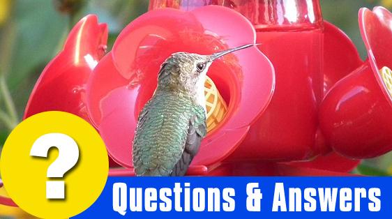 humming-bird-questions