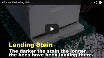 bee-landing-stain-video-cap