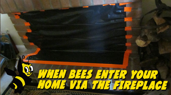 fireplace-bee-prevention
