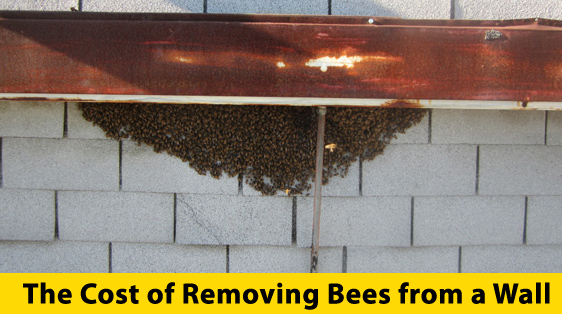 cost-of-removing-bees-...