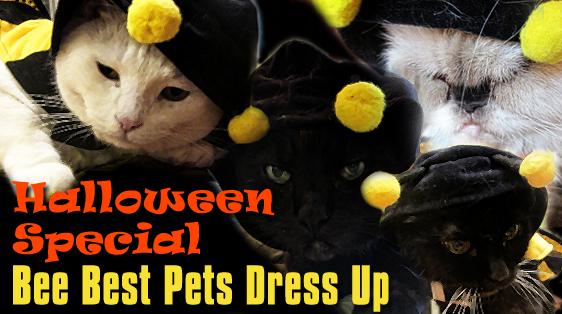 halloween-special-bee-best-pets