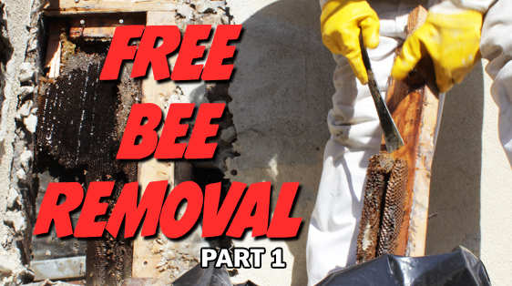 Free-Bee-Removal-Part1