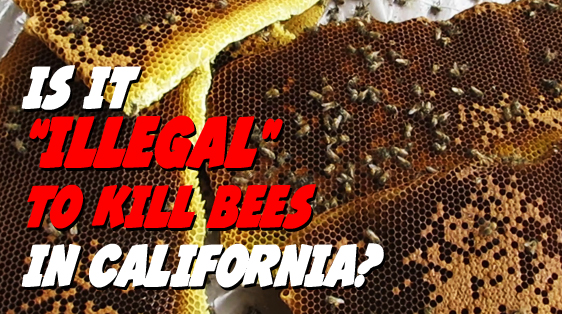 illegal-to-kill-bees-in-california