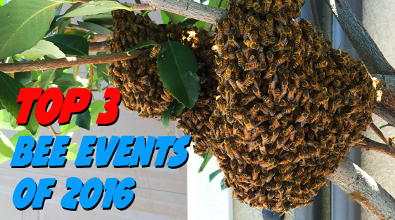 top-3-bee-events-2016