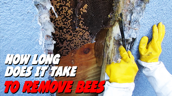 how-long-deoas-it-take-for-bee-removal