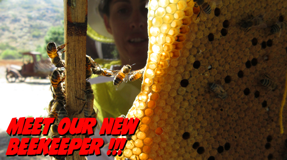 Bees Hanging onto a frame with honeycomb
