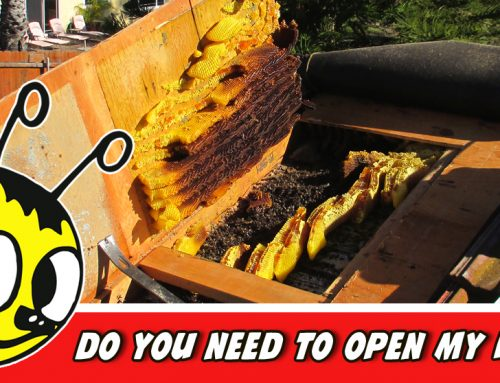What To Do When Bees Enter Your Home Through Your